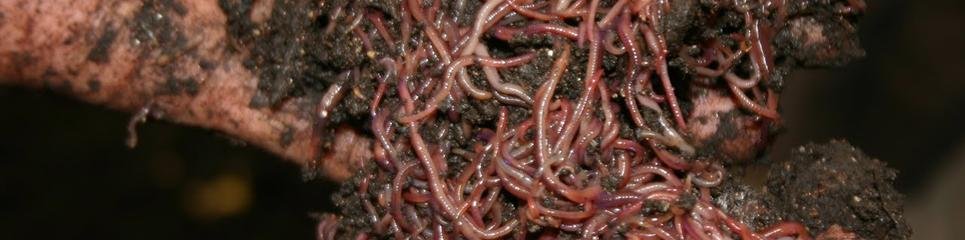 yummy worms